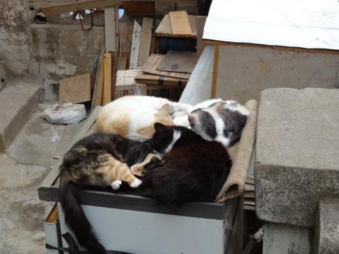 Pile O' Cats
