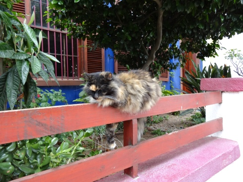 Kitty on a fence
