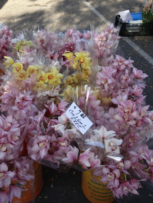 Orchids...Buy 1, get 1 Free