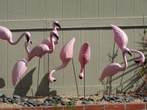Errant flamingos